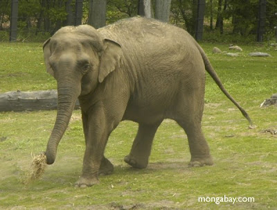 ANIMAL PLANET 3000: Fotos de Elefante,Origen,Historia.
