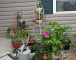 my container garden1