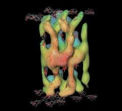 مختارات : بقلم الباحثة وديعة عمراني{مبحث جديد في الإعجاز العلمي : الجلد ذلك الشاهد الأكبر }