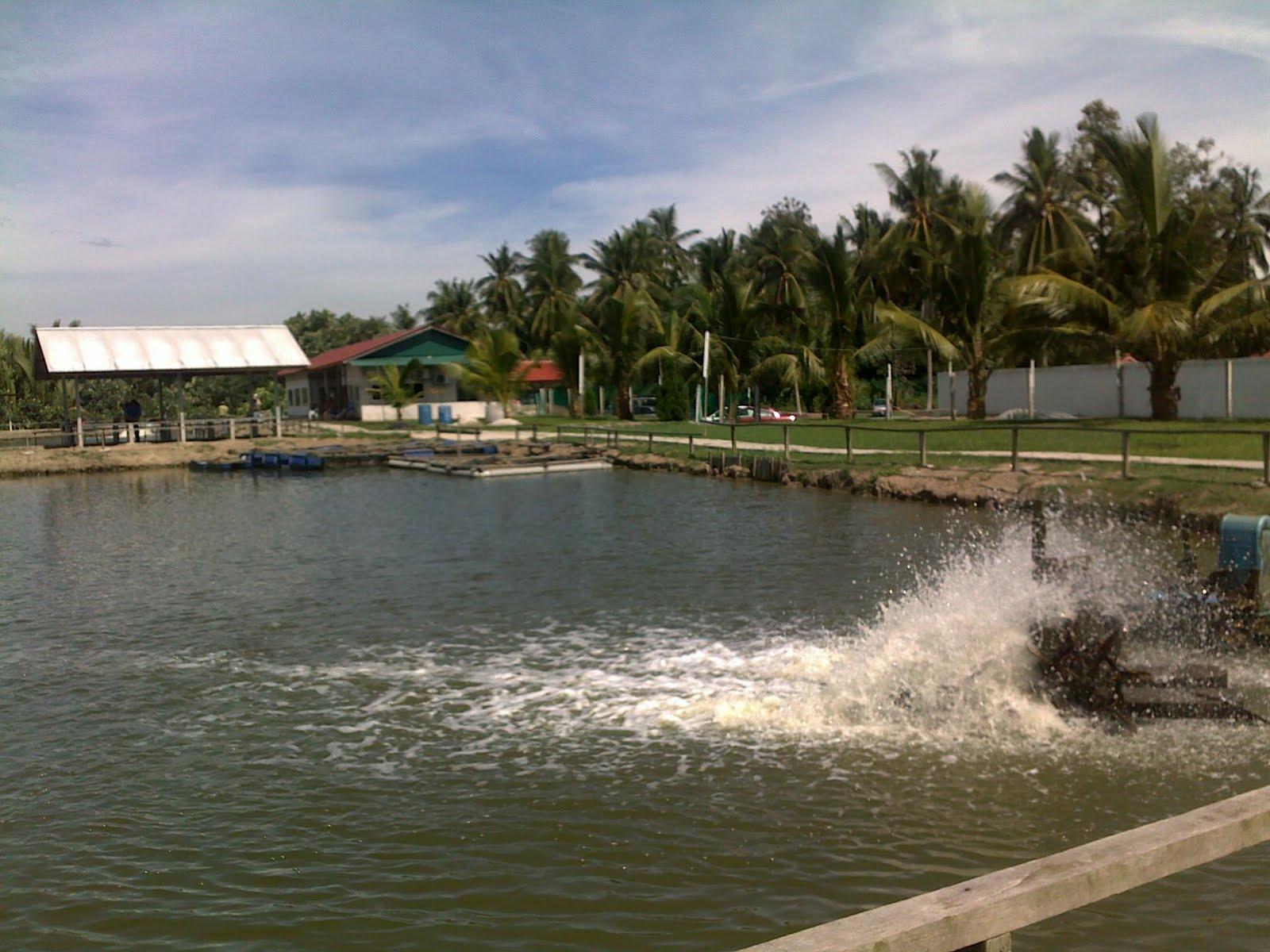 Pandangan penjuru kolam