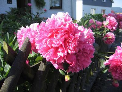Rote Rosen Xxl 6 Wochen Vorschau Vorschauxxlde