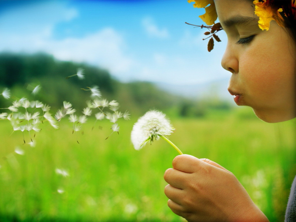 Oget Dandelion Bunga Liar Yang Tangguh Dan Indah