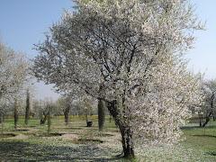 BADAAM VAARI