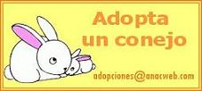 ¿Quieres adoptar un conejito?