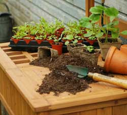 Of Peat Pots, Yogurt Cups and Accelerated Propagation Systems
