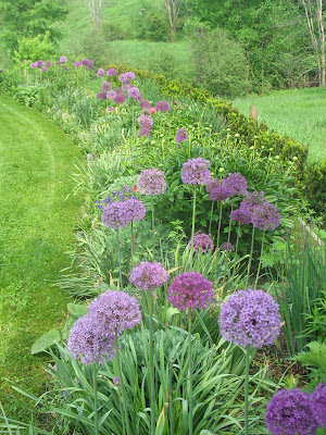 Alliums—the Ornamental Onions