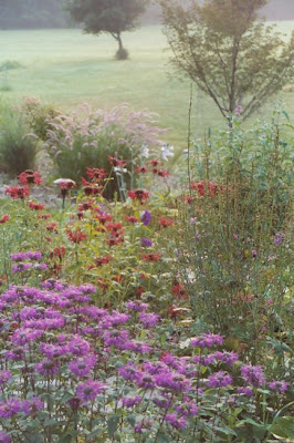 Dividing Vigorous Perennials