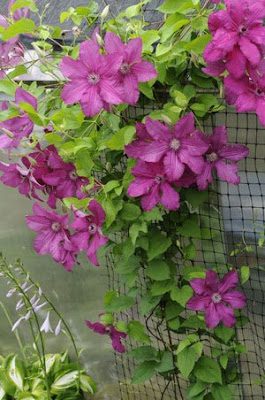 Flexible Clematis Support