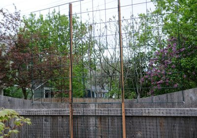 Using Garden Grids to create a custom trellis