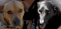 Zach & Lizzie a bonded pair of 7 year old dogs losing their owner to cancer and their home.
