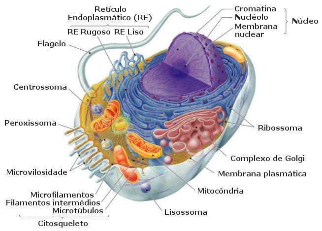 Biologia seres vivos anatomia e fisiologia humanas