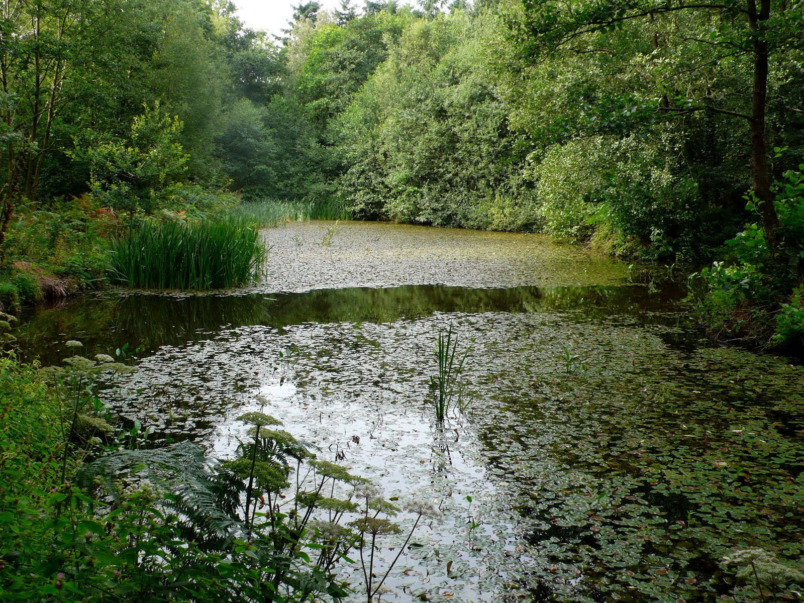 Share my garden ponds and pools for Shallow garden pond