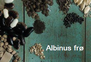 Albinus frø