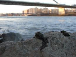 Excrementos de nutria bajo el nuevo puente del AVE en el barrio de las Fuentes, Zaragoza