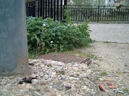 Excremento de Garduña al pie de una farola en Codos (Zaragoza)