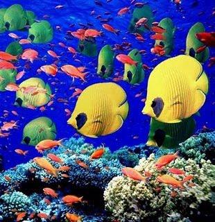 fotos de peixes4