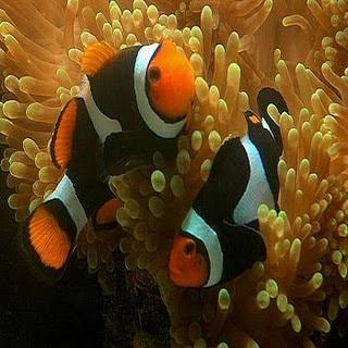 fotos de peixes5