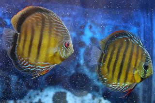 fotos de peixes2
