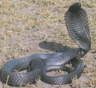 Significado em sonhar com uma cobra