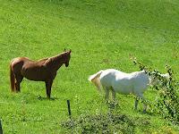 ヴェルコールのレ・クロの馬