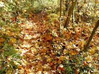 紅葉のルジョーの森