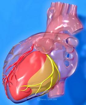коронарные артерии сердца - coronary arteries of the heart