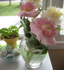 Peonies in my Window