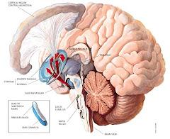 La matrice extracellulare e gli impulsi nervosi