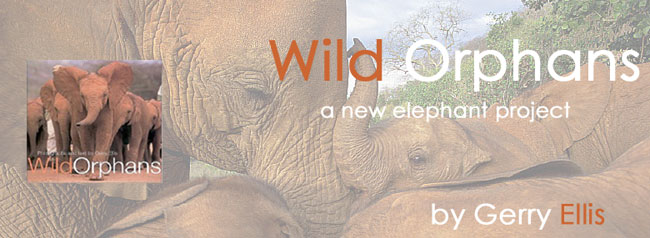 Wild Orphans baby elephant project