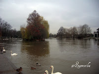 Thames river flowing through Windsor
