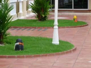El misterio de los enanos de jardin continua for Enano jardin