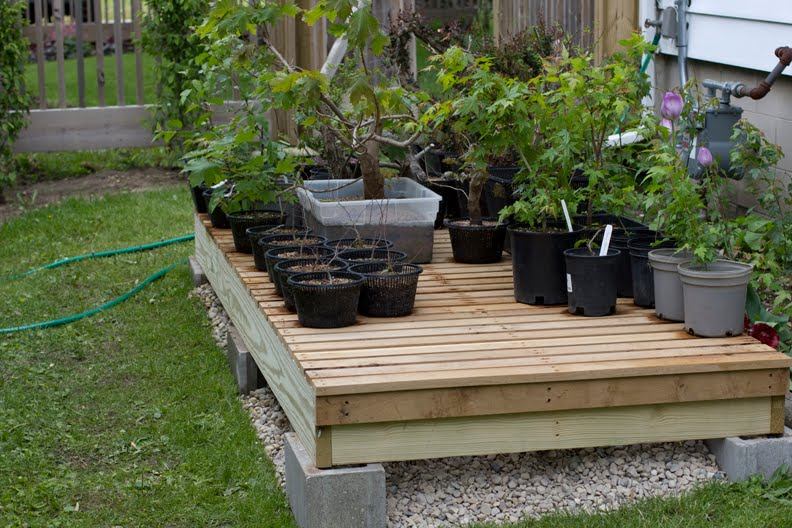 Bonsai Benches 28 Images Display Bonsai And Benches On Pinterest Matthew Holt S Artistic