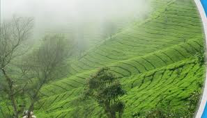 traveldestinationmunnar