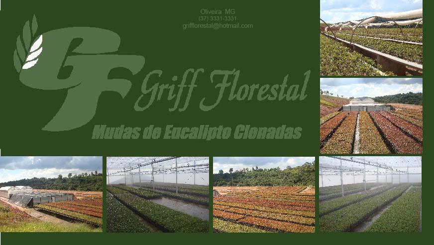 GRIFF FLORESTAL - VIVEIRO DE MUDAS DE EUCALIPTO CLONADAS