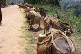 Donkey Waiting for their Load