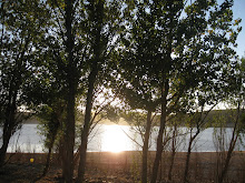 puesta de sol sobre el pantano