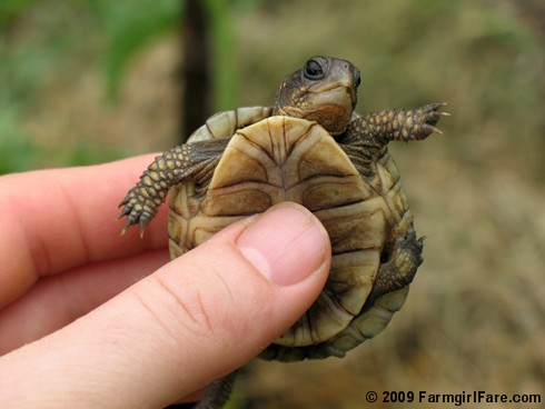 The Tiny Tickled Turtle