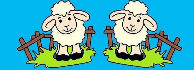 Pre-Kinder Lambs