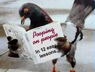 bird_poop