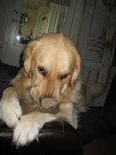 Rakas koirani