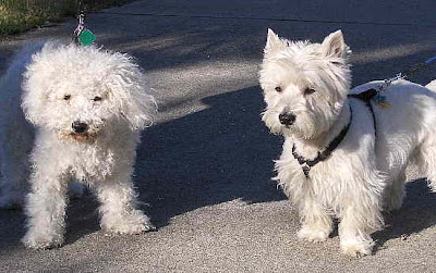 Bill and Roger's dogs: Heidi and Maximillian.