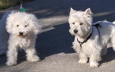 Bill and Roger's dogs: Heidi and Maximillian.