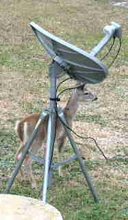 Photo of deer and satellite TV antenna