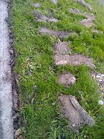 turfs cut from several years of sidewalk encroachments