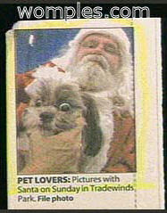 really funny stupid news photo santa and dog grumpy