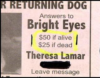 funny dead or alive lost and found dog notice for bright eyes reward offered