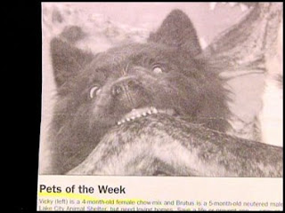 funny news stories pet of the week dog looks like wolf biting on deer baring teeth and really angry