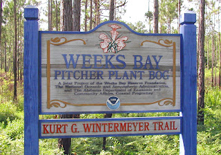 Welcome to Weeks Bay Pitcher Plant Bog