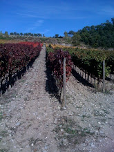 rasta vineyard