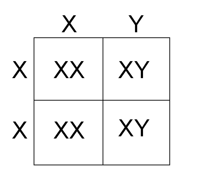 And Thats The Punnett Square In Simplest Of Terms Genetics Is Cool This Just Beginning Read On For More Combinations If